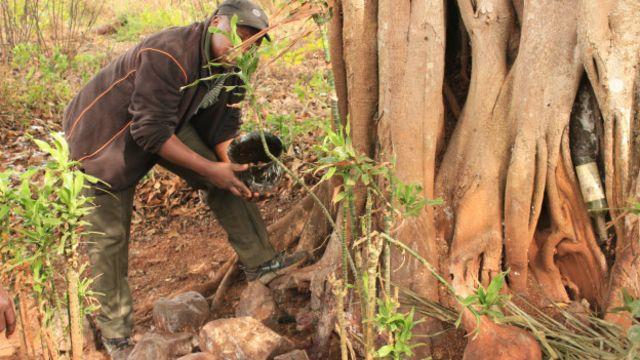 Un notable fait des sacrifices au pied du grand baobab, lieu sacré du village de Bangou.