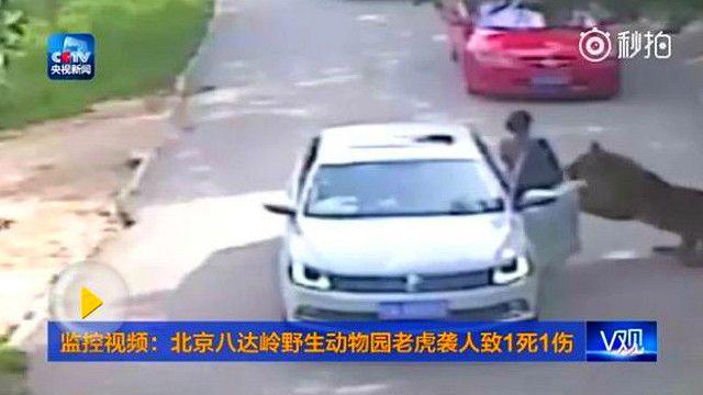 china_beijing_tiger_attack