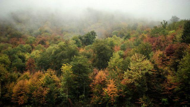 جنگلهای هیرکانی در سراسر حاشیه جنوبی دریای خزر کشیده شده است