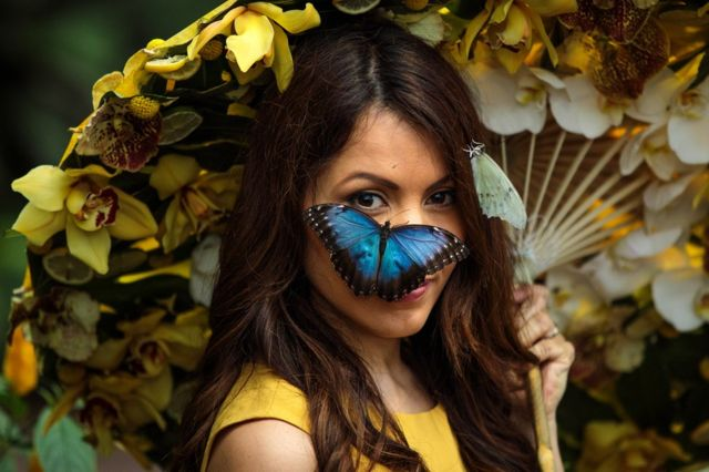薩里郡沃金附近的皇家植物協會威斯利花園,一隻藍色大閃蝶停在模特傑西·貝克爾的臉上。