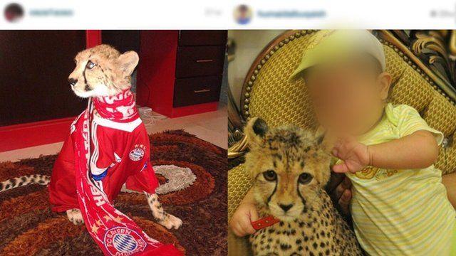 Cheetah in house