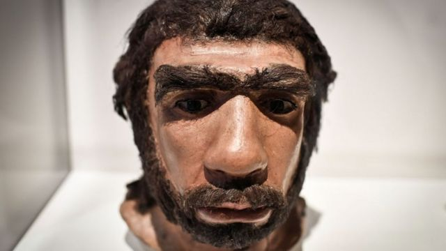 Face of a Neanderthal