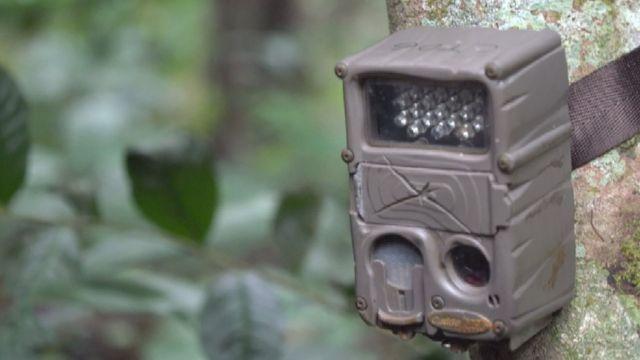 Camera adherida a los árboles.