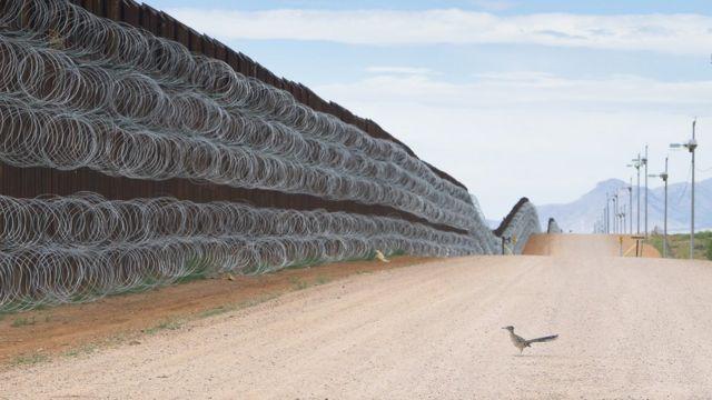 Un correcaminos se acerca al muro fronterizo en Naco, Arizona, EE.UU.