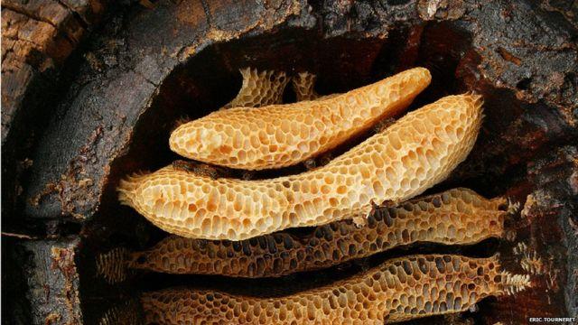 Prehistoric farmers were first beekeepers