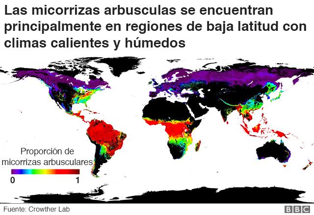 Mapa de distribución de micorrizas arbusculares