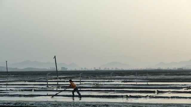 Las salinas son un lugar excelente para las aves migratorias en Corea del Norte.