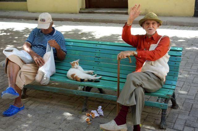 Havana'da iki kişinin arasında bankta uyuyan kedi