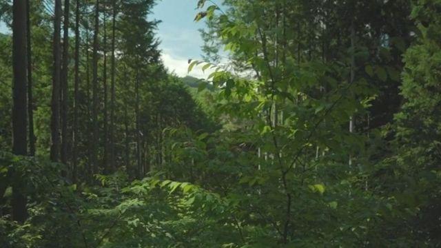 જાપાનનું જંગલ