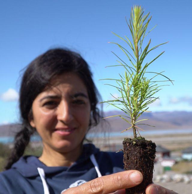Faezeh Nick planta árboles cerca de Narsarsuaq.