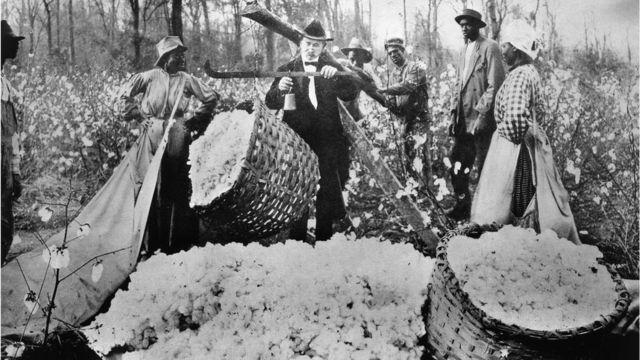 Imagen antigua de esclavos brasileros en un sembrío de algodón.