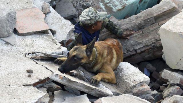 Un perro y su guía buscan entre los escombros en Juchitán de Zaragoza.