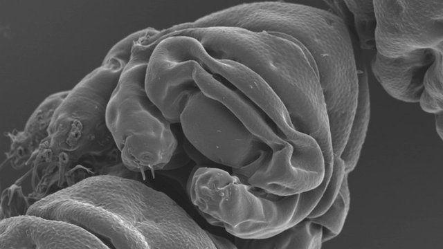 Meet Earth's indestructible micro-beast