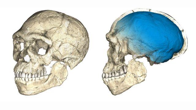 Reconstrução de crânio de um dos primeiros tipos de Homo Sapiens, baseada em crânios de vários fósseis