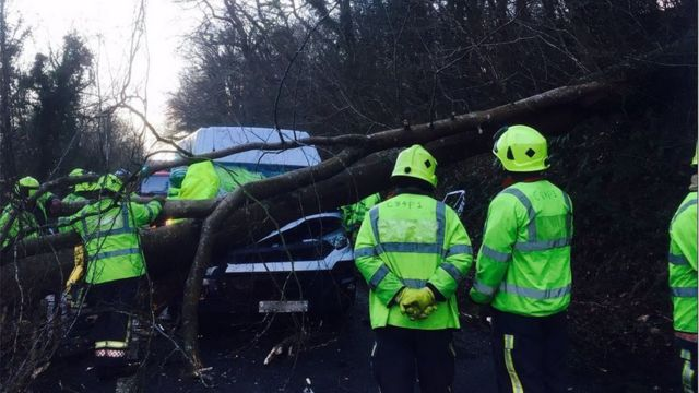 Fallen tree crushes van near Torpoint, Cornwall