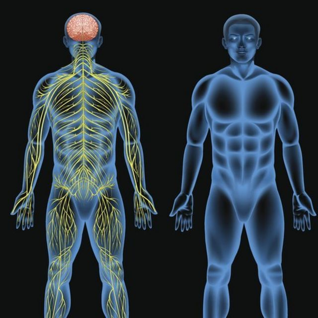Arte do corpo humano