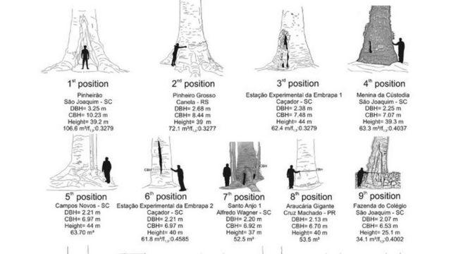 mapeamento de araucárias