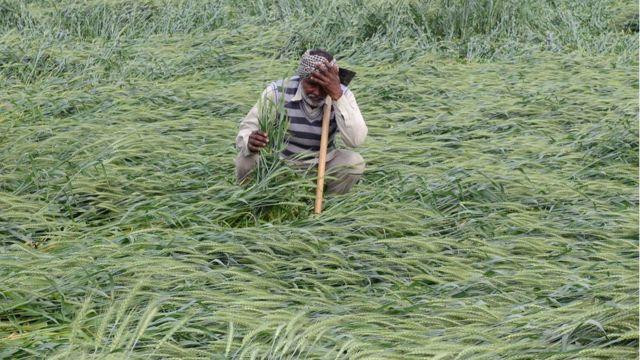 రైతుల ఆత్మహత్యలు, వ్యవసాయ సంక్షోభం