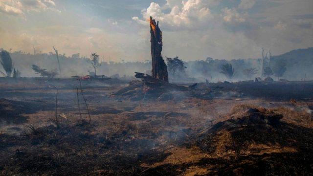 अमेजनको वन विनाश