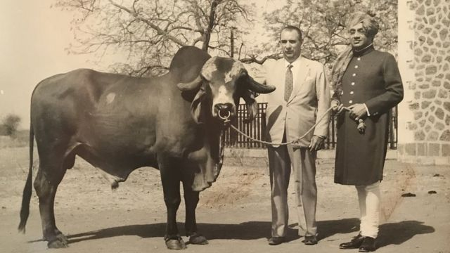 Celso Cid, o marajá de Bhavnagar e um touro do brasileiro