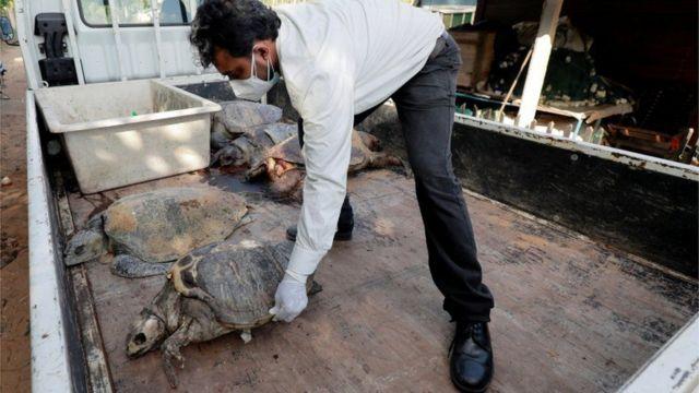 Kıyıya vuran ölü deniz hayvanları arasında en az 176 deniz kaplumbağası olduğu bildiriliyor