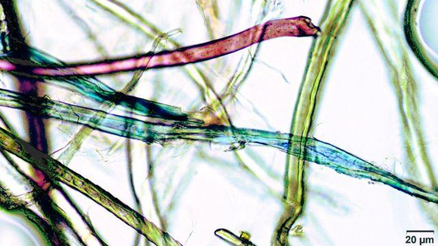 Partículas microscópicas de microplásticos