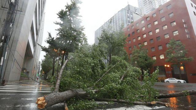 Гілка дерева в центрі Осаки