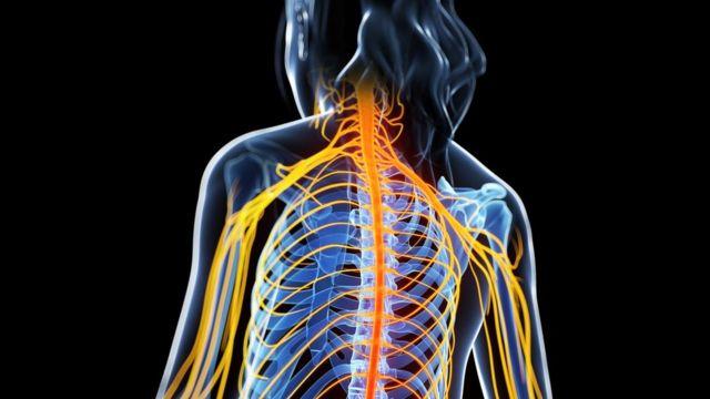 Ilustración de la multiesclerosis atacando la médula espinal