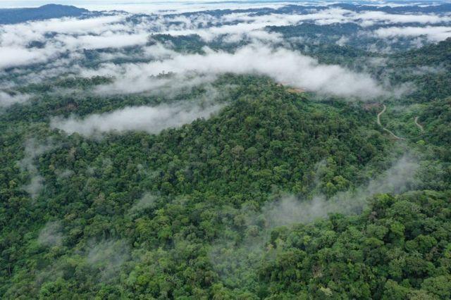 Дощові ліси