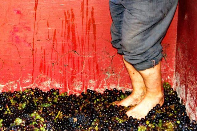 Aplastando uvas