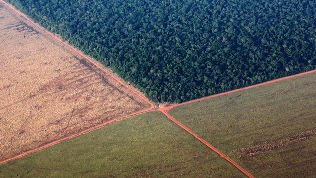 Trecho da Amazônia cercado de área para plantio de soja em Mato Grosso