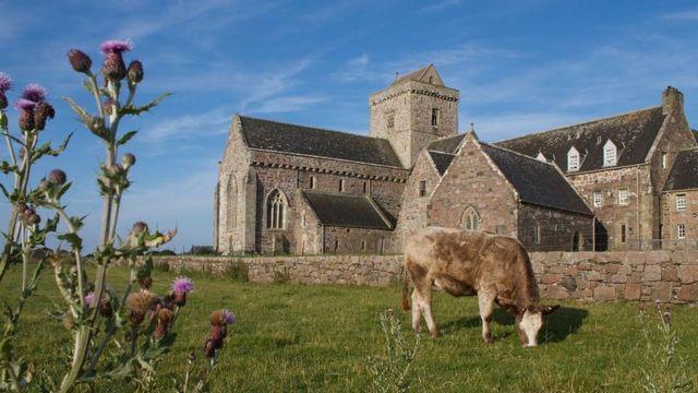 Корова перед аббатством на Айоне