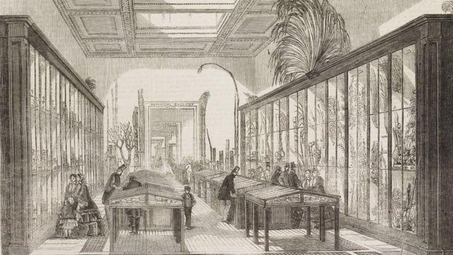 Зал ботаники в Британском музее, 1858 год