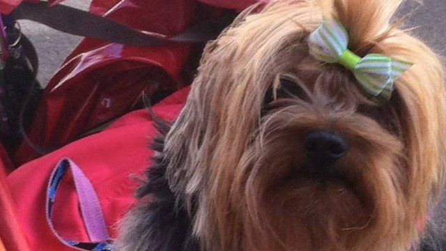 Gog the dog was stolen in Leicester while her owner was shopping