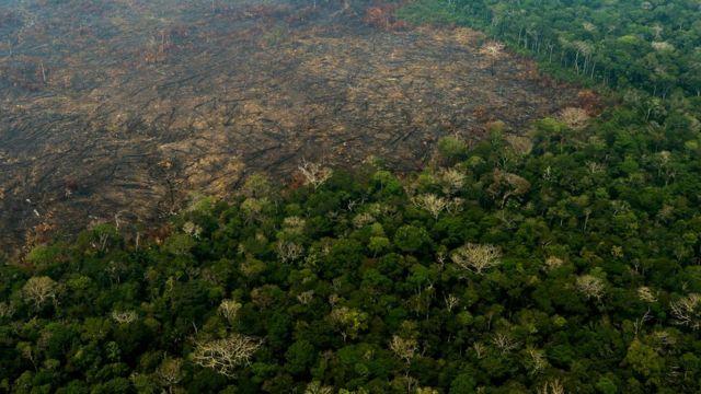 Amazônia, Estado do Amazonas