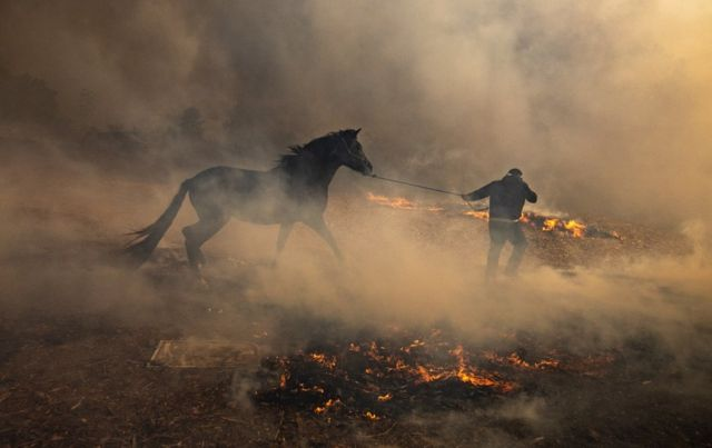 A man leads a horse on a rope through a field of smoke and small flames