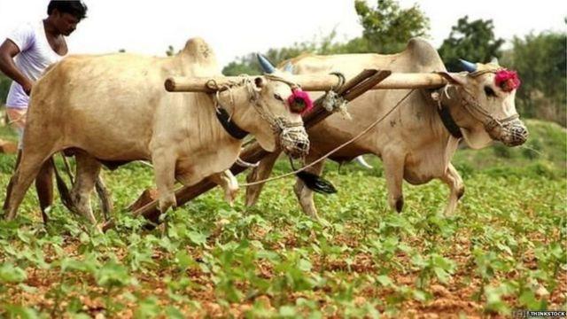 किसान की ख़ुदकुशी