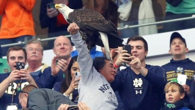 Tuyen Nguyen pictured with Clark the bald eagle sitting on his outstretched arm