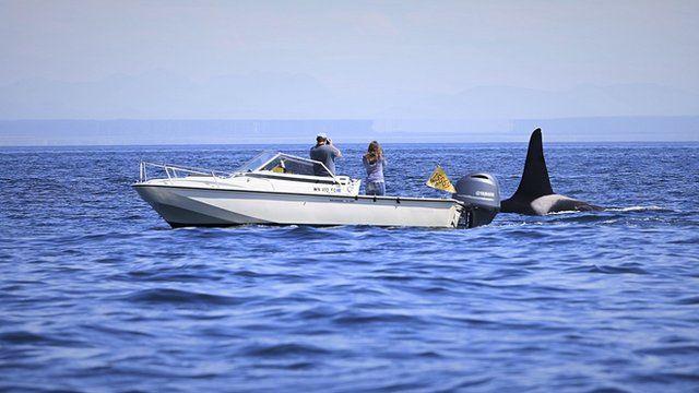Killer whale researchers (c) Victoria Gill