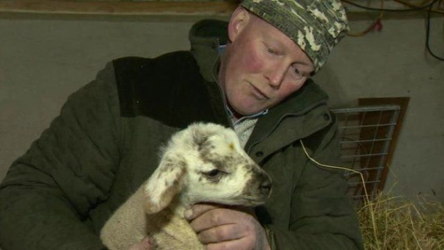 Alan Sloane holding a lamb