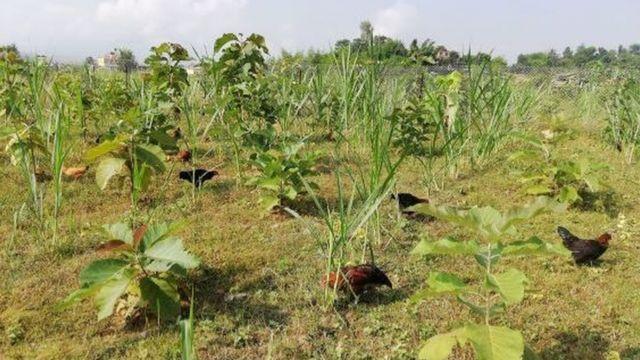सरकारी कर्मचारी सुशील केसीको कृषि फार्म