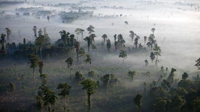 Bosque , Indonesia