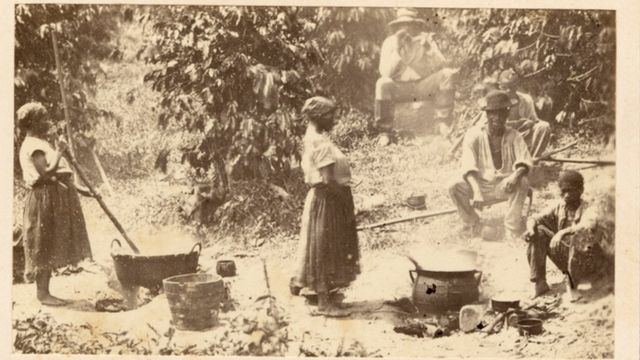 Escravos trabalham em uma plantação de café no Brasil