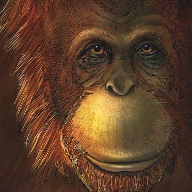 umetnička predstava ovog majmuna