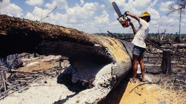 Hombre con sierra cortando árbol