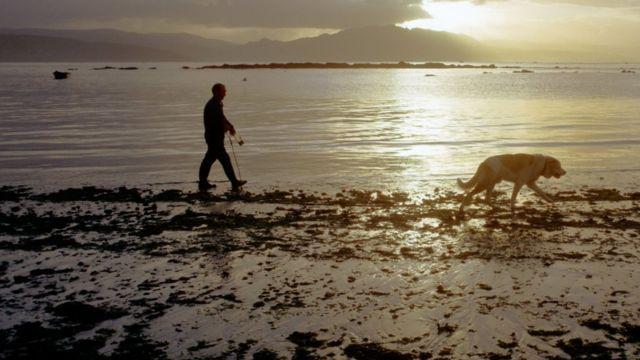 Un hombre y un perro en la playa