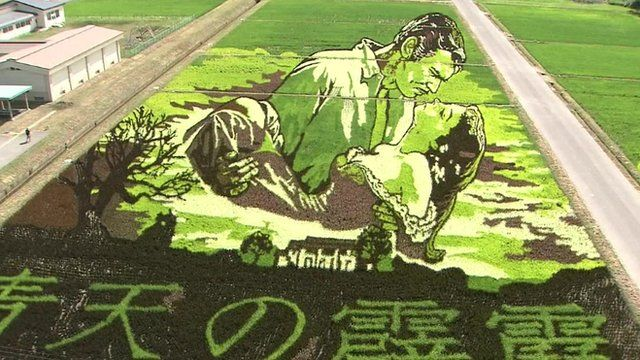 Artwork grown from coloured rice