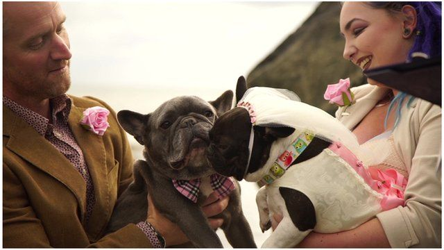 French bulldogs Maya and Dexter get married