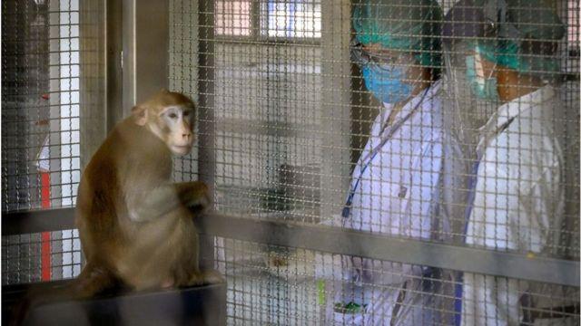 Un mono en una jaula