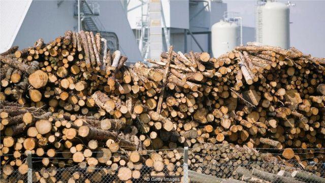 只有倒下的树木被能从空气中吸收二氧化碳的新树苗所取代时,生物燃料才能减少碳排放。